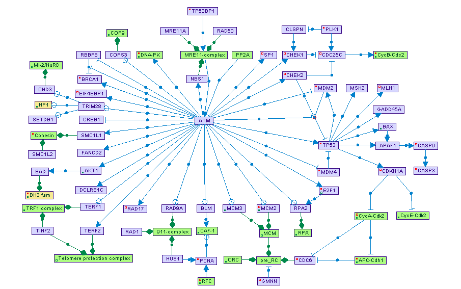 Gene Expression Concept Map